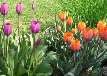 Garden051507